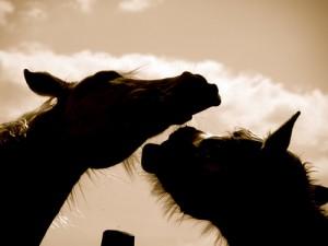 Bild hästslagsmål: Debatt om vem som ska leda flocken.
